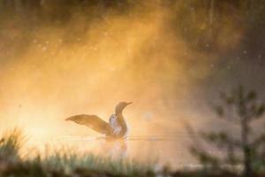 lunatico rosso nella nebbia foto