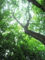 albero, drake park, curva o foto