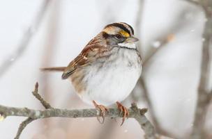 uccello nella neve foto