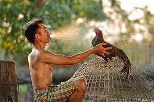uomo che pulisce il gamecock tailandese foto