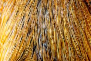 sfondo di piume di pollo foto