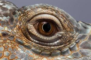 occhio del primo piano dell'iguana verde