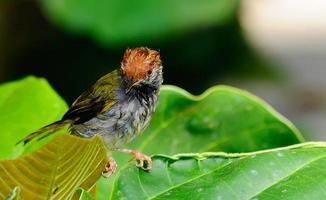 colibrì foto
