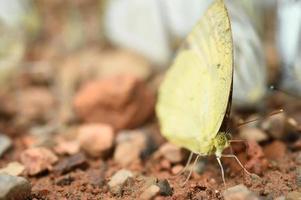 farfalla sul terreno