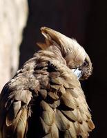 hammerkop si prende una pausa foto