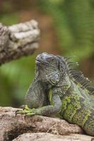 rettile. reptil