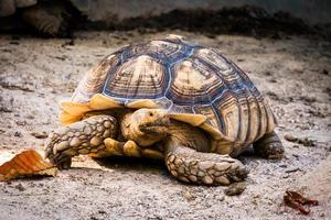 tartaruga in natura foto