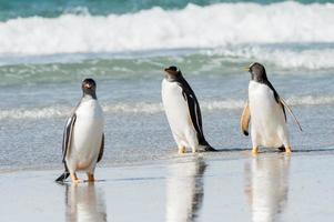 pinguini in Antartide