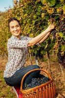 giovane donna raccolta uva