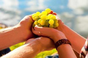 uva bianca in mano, luce solare