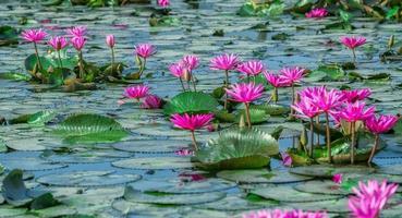 percorso waterlily