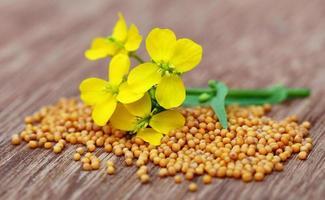 fiori di senape con semi