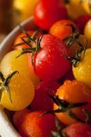 pomodori ciliegia biologici cimelio foto