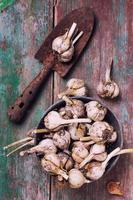 aglio su fondo in legno foto