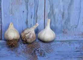 tre bulbi d'aglio biologici foto