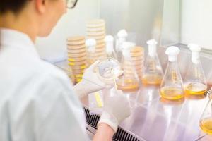 ricercatore di scienze della vita che innesta batteri. foto