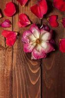 tema di San Valentino foto
