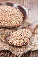 chicchi di grano foto