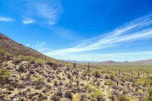 bellissimo paesaggio desertico di montagna con cactus foto