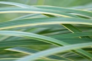 sfondo di erba foto