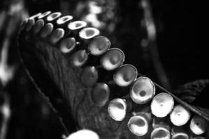 polpo comune foto