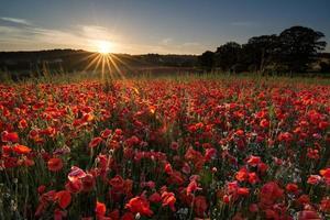 alba del solstizio d'estate foto