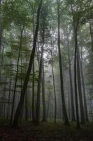foresta nebbiosa d'estate