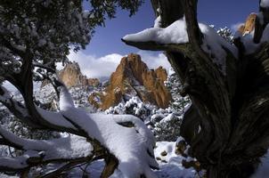 giardino di neve fresca incorniciato da ginepri foto