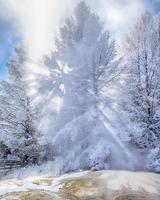albero coperto di neve retroilluminato con raggi di sole a Mammoth Hot Springs
