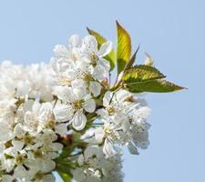 fiori di primavera foto