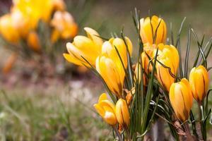 febbre di primavera