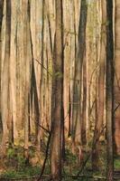 foresta di primavera foto