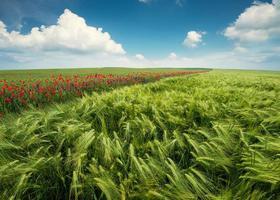paesaggio agricolo foto