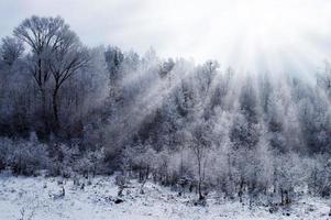 legno d'inverno foto
