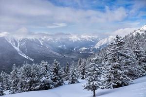alberi di neve invernale e paesaggio delle montagne foto