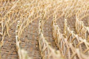fila di tessuto di bambù, un cesto di bozzoli di verme