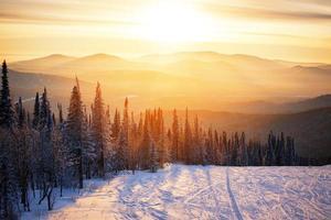 tramonto della foresta di inverno foto