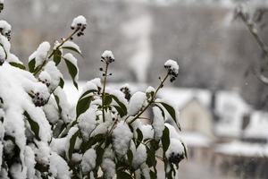 inverno lussemburgo, europa foto