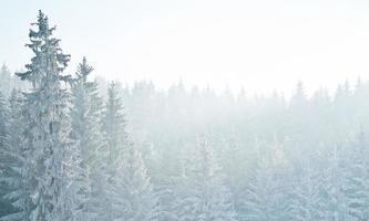 foresta in inverno foto