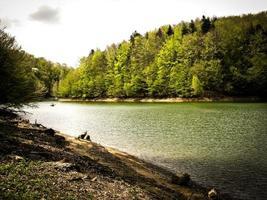 lago della foresta foto