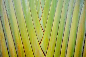 modello di steli di palma allineati in file foto