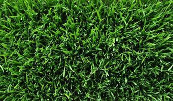 sfondo di un prato verde foto