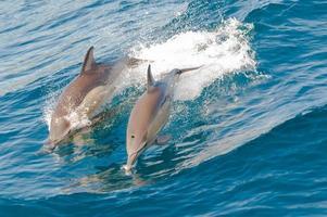 i delfini che saltano foto