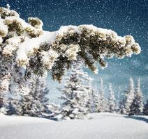 nevicando nella foresta dell'albero di abete rosso