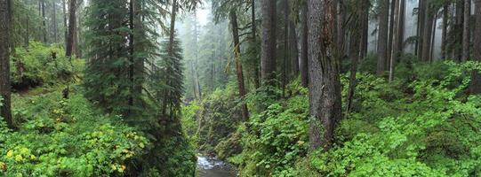 hoh foresta pluviale