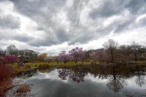 primavera nuvolosa nell'arboreto di Harvard, Boston foto