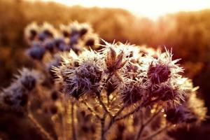 ghiaccio sul fiore con il sole foto