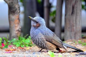 uccello foto