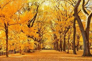 autunno a Central Park foto