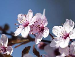 sfondo di primavera foto